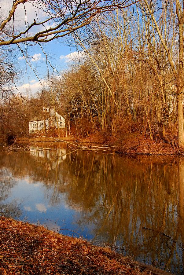 New Jersey Photograph - Scene In The Forest - Allaire State Park by Angie Tirado