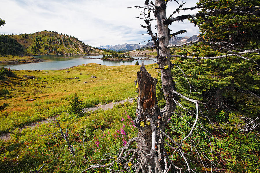 Alberta Photograph - Scenic Alpine Lake And Meadow by George Oze