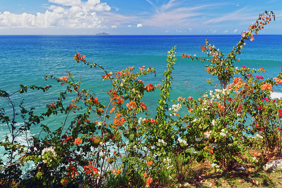Bougainvillea Photograph - Scenic Coastal View With The Desecheo Island by George Oze