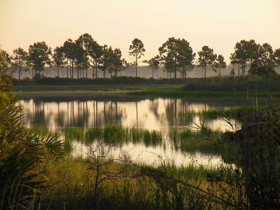 Pond Photograph - Scenic Reflections After Sunrise by Rosalie Scanlon