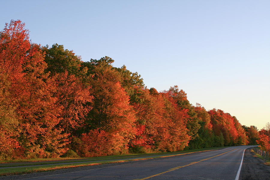 Fall Colours Photograph - Scenic Route by David Barker