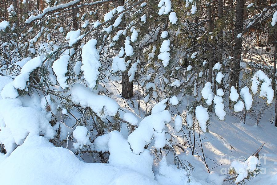 Scenic Snowy Forest .. Photograph