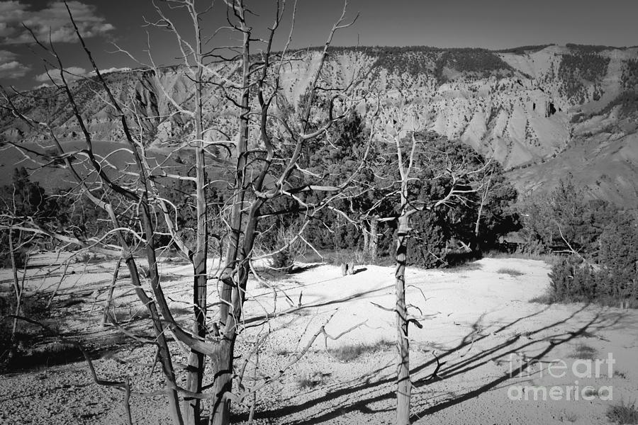 Scenic View by Bob Mintie