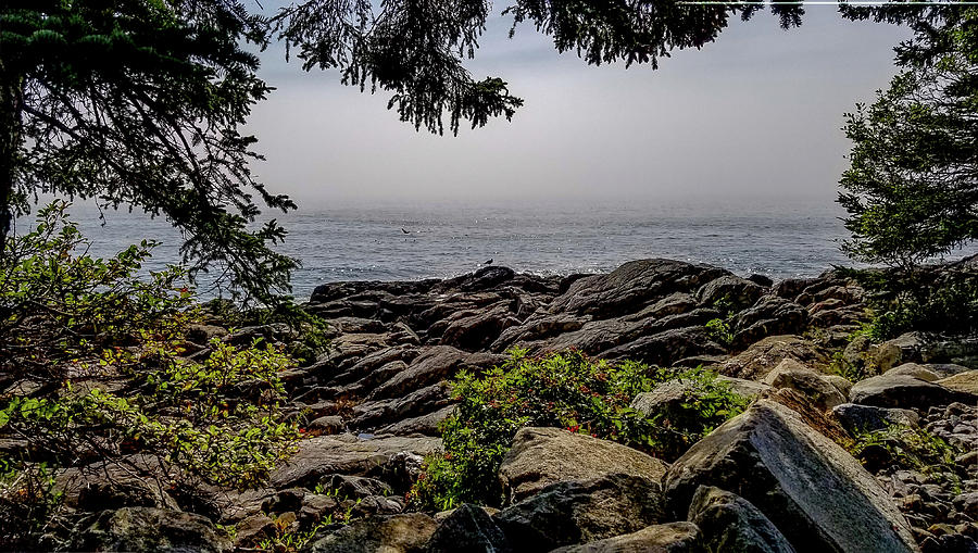 Scenic View from Marshall Point, Maine by Marilyn Burton