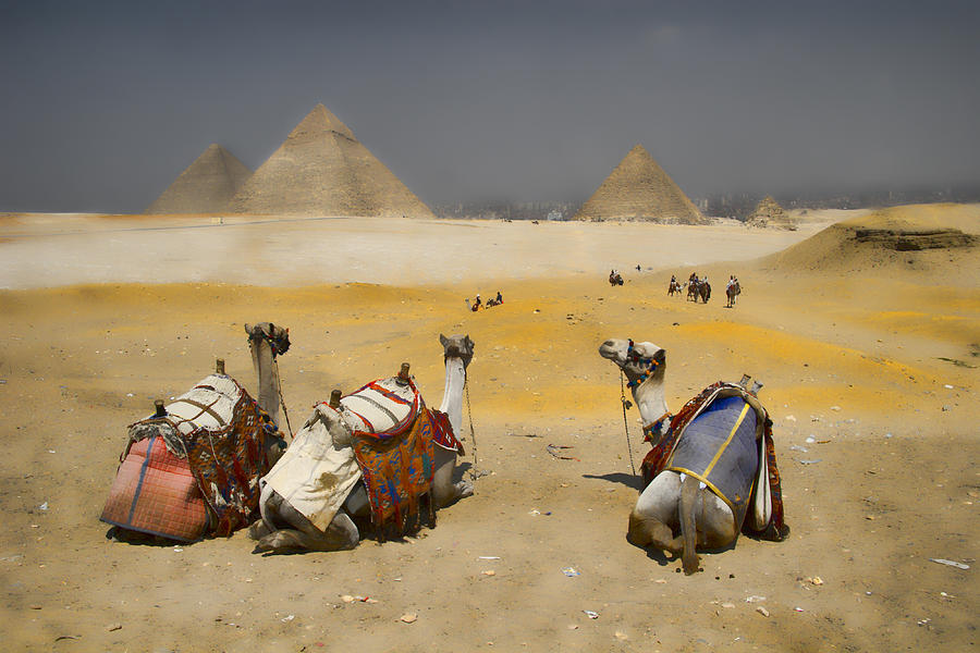 Egypt Photograph - Scenic View Of The Giza Pyramids With Sitting Camels by David Smith
