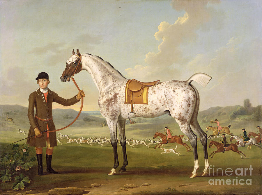 Scipio Painting - Scipio - Colonel Roches Spotted Hunter by Thomas Spencer