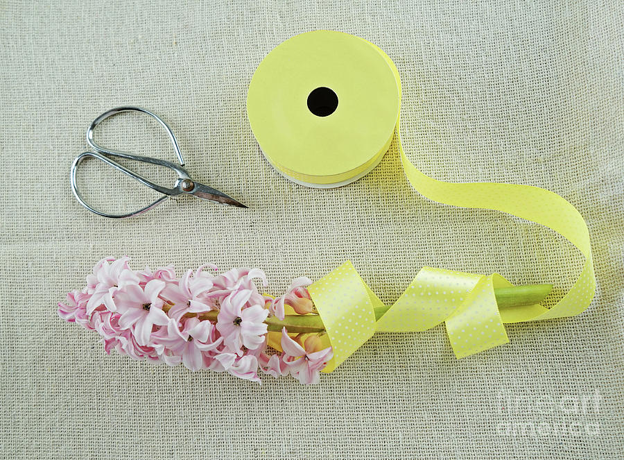 Scissors And Hyacinth Photograph