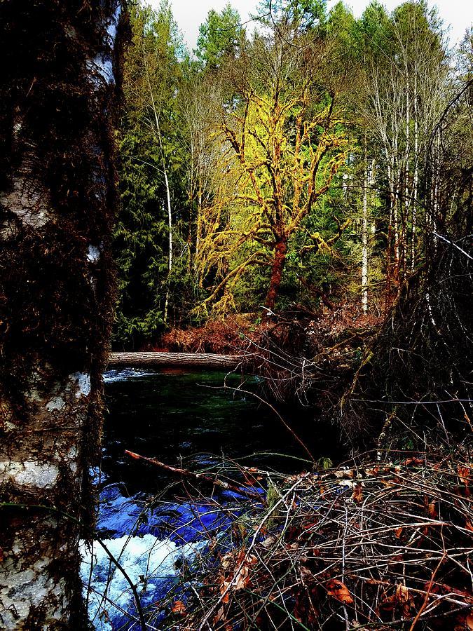 Scoggins Creek 3 Photograph