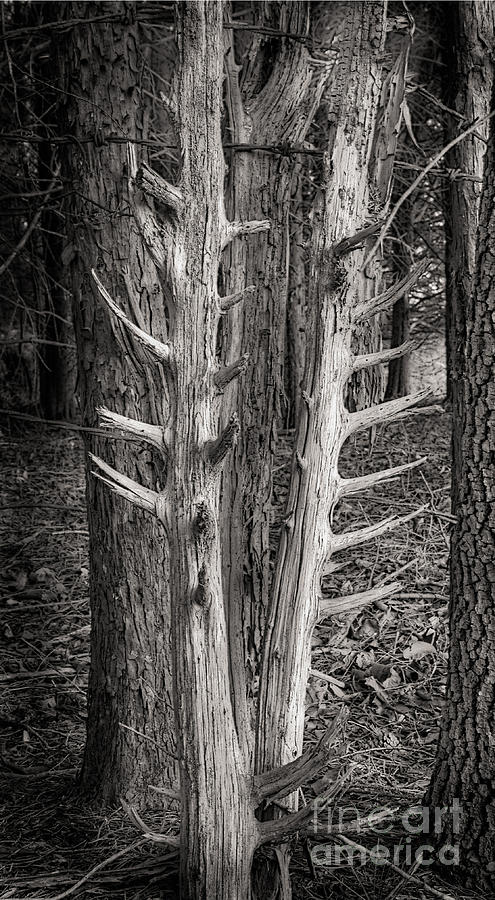 Scotopic Photograph - Scotopic Vision 4 - Trees by Pete Hellmann
