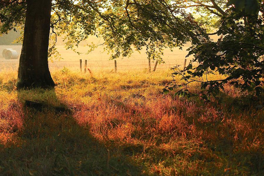 Scotland Photograph - Scottish Farm by Jim Cotton