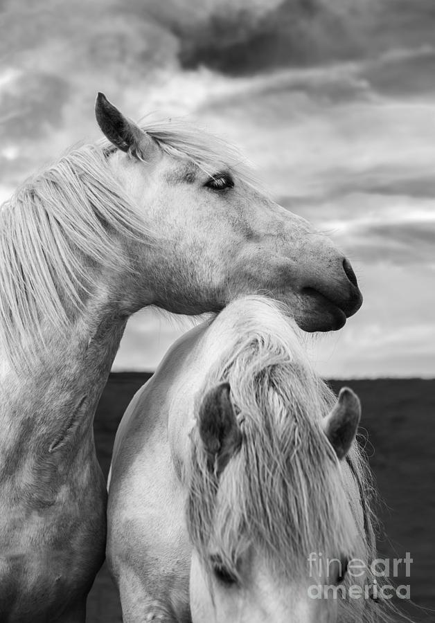 Horses Photograph - Scottish Horses by Diane Diederich