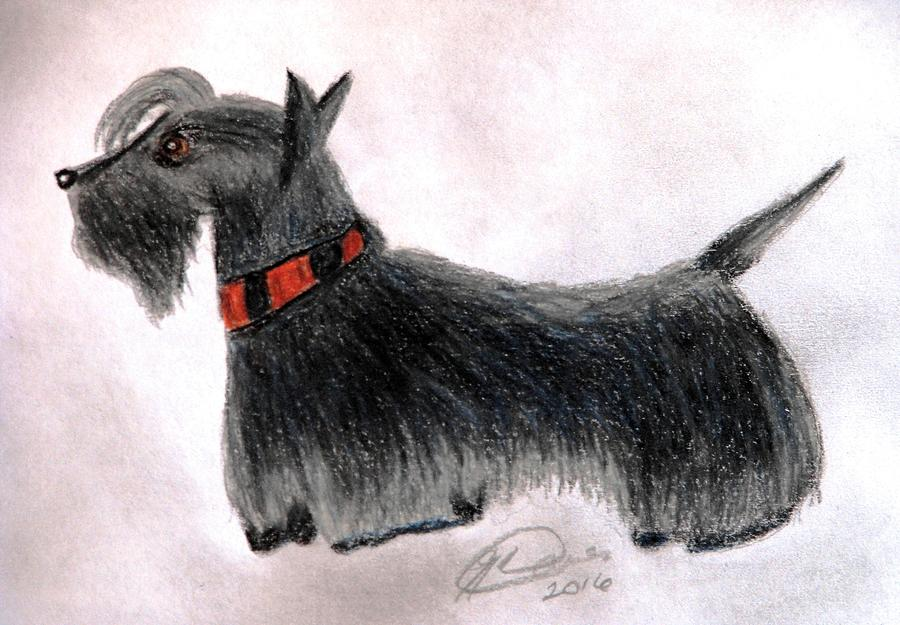 Dogs Drawing - Scotty Elegance by Angela Davies