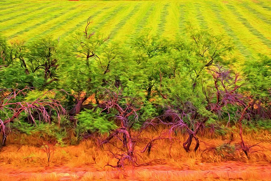 Trees Photograph - Scraggly On The Edge by Alice Gipson