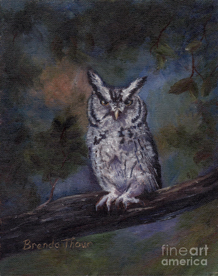 Owl Painting - Screech Owl by Brenda Thour