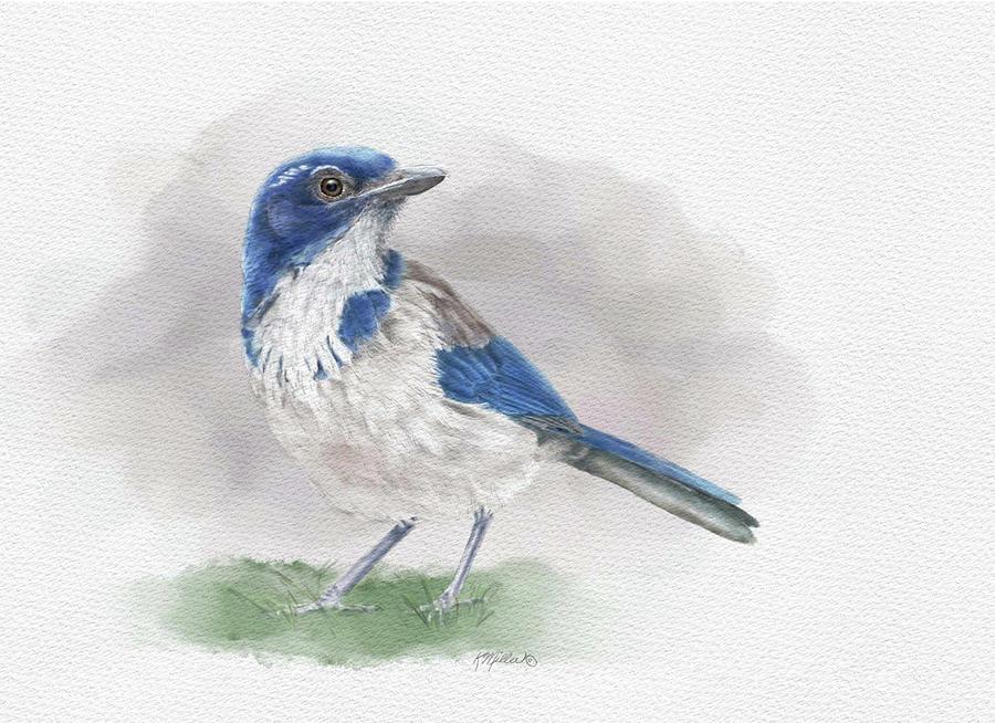 Scrub Jay Painting - Scrub Jay by Kathie Miller