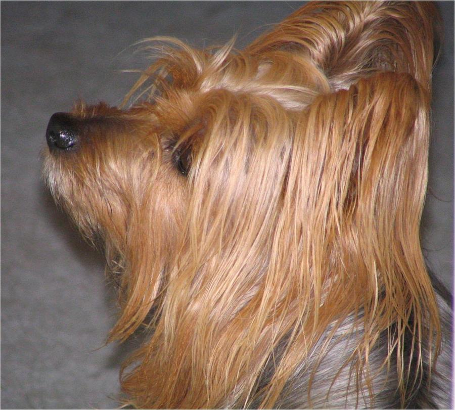 Dogs Photograph - Scruffy by Peggy Holcroft