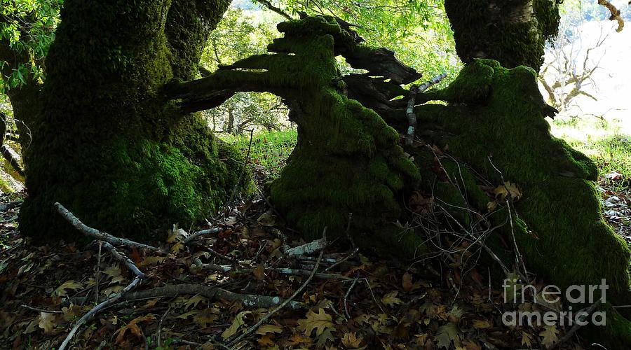 Trees Photograph - Sculpture In Process by JoAnn SkyWatcher