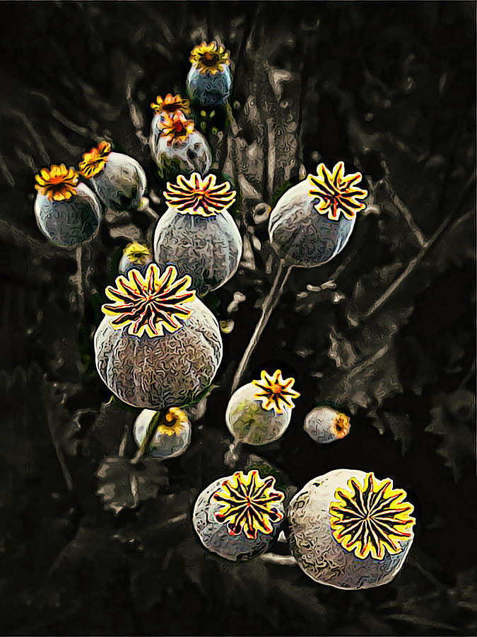 Sculpture Of Black Poppy Seed Pods Painting By Elaine Plesser