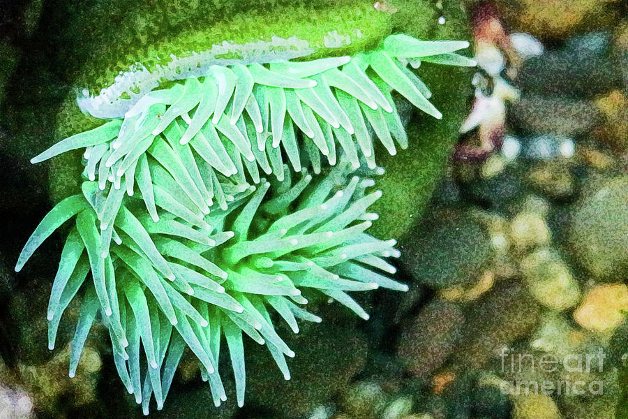 Sea Anemone Photograph by Ronald and Nancy