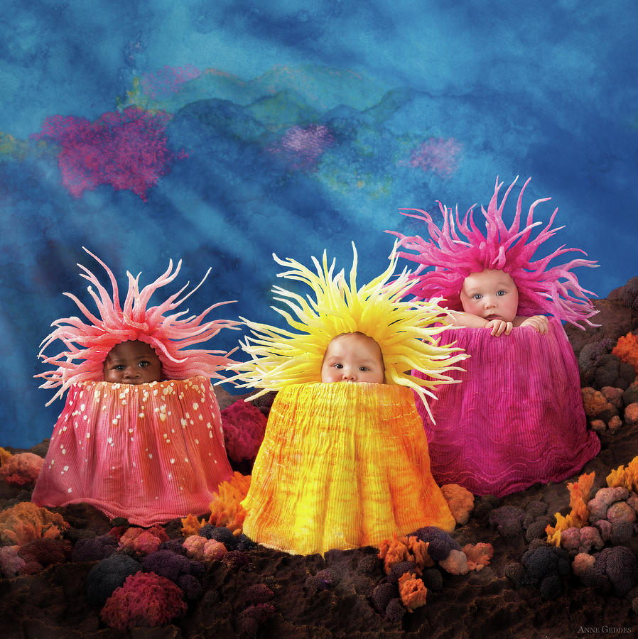 Under The Sea Photograph - Sea Anemones  by Anne Geddes