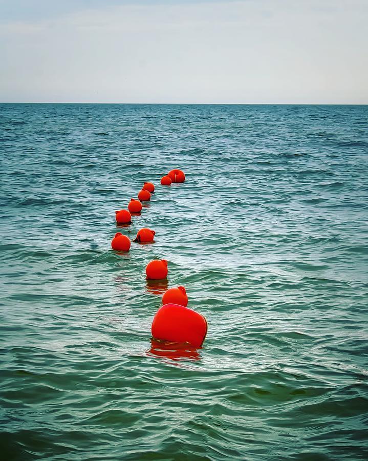Sea Photograph - Sea Berries by Nadezda Romanova