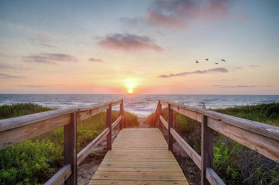 Ocean Photograph - Sea Birds At Sunrise by Robert Huber