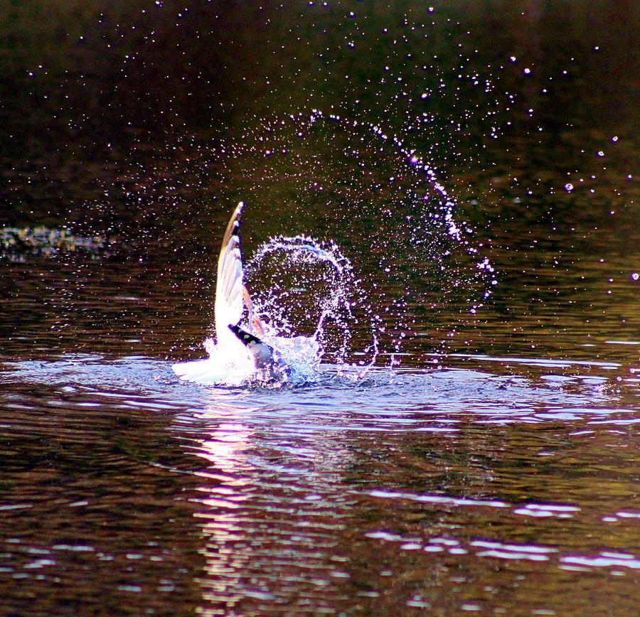 Sea Photograph - Sea Gull Abstract by Karen Silvestri
