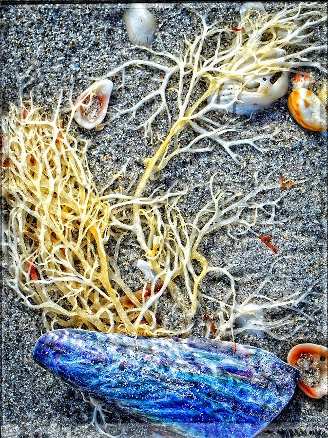 Sea Life Painting - Sea Life Art By Sharon Cummings by Sharon Cummings