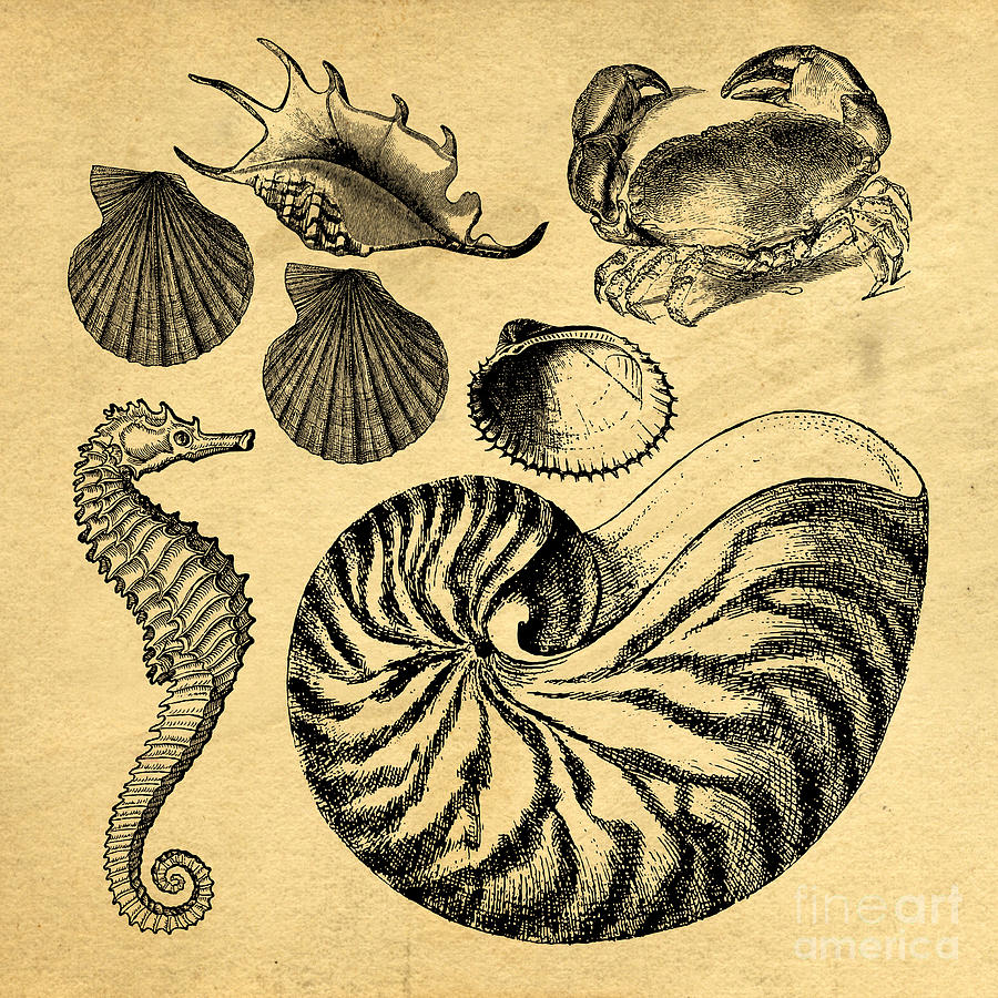 Sea Life Vintage Illustrations Drawing by Edward Fielding