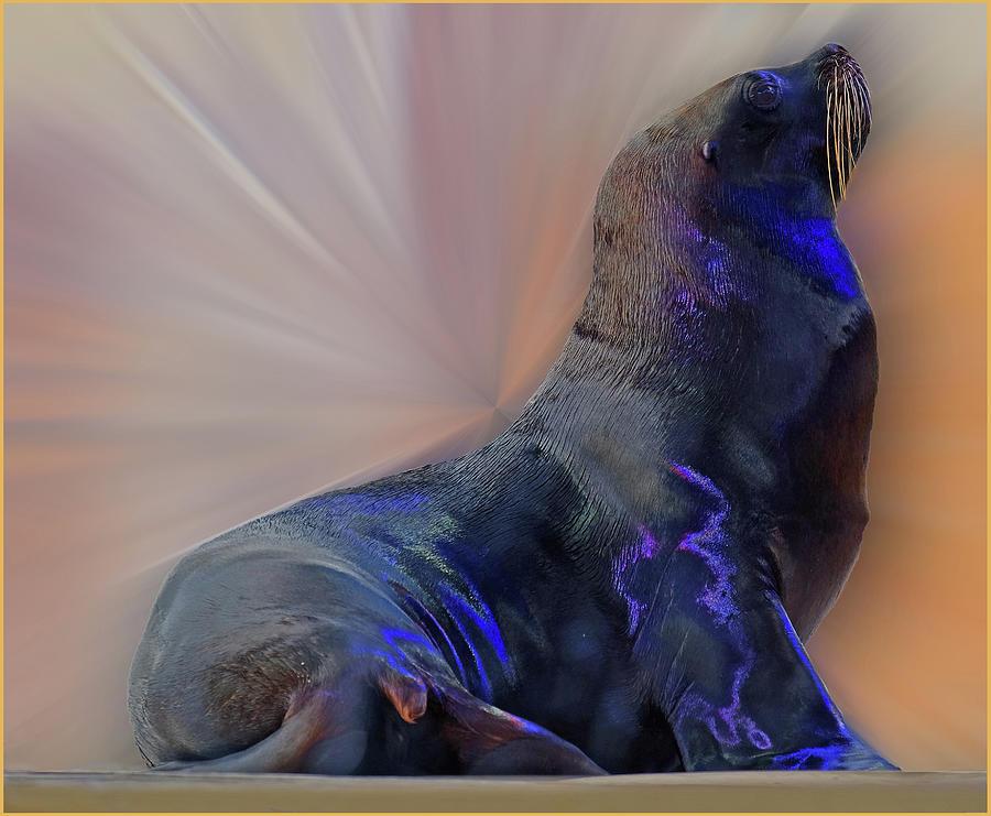 Sea Lion Photograph - Sea Lion Constancesart by Constance Lowery