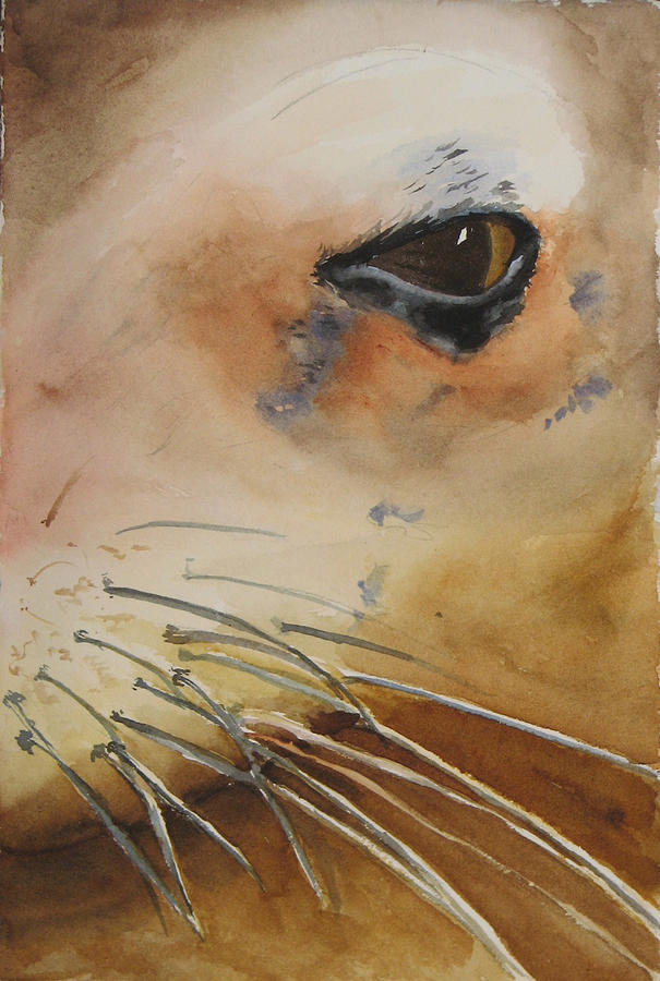 Sea Lion Painting - Sea Lion Eye by Libby  Cagle