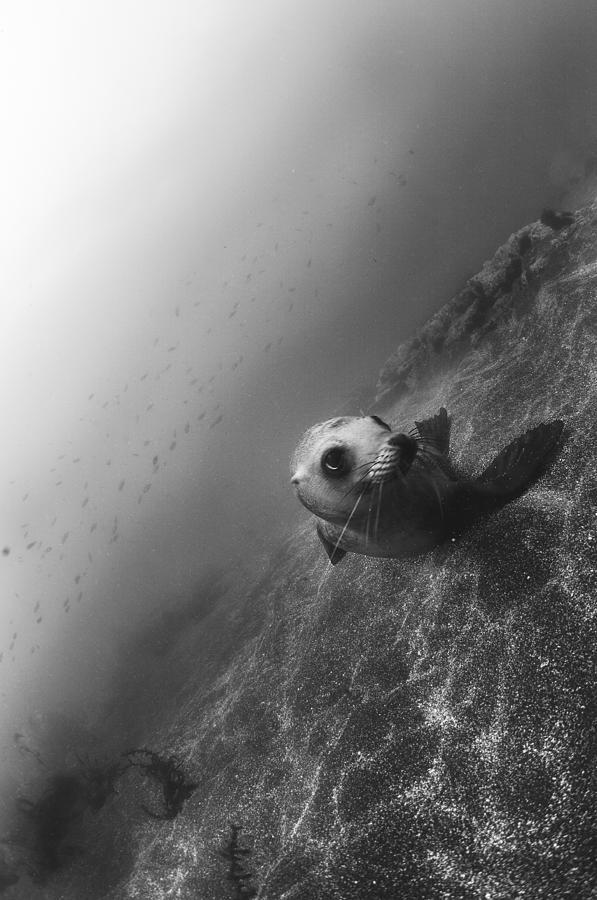 Sea Lion Photograph - Sea Lion Portrait by Bryan Toro