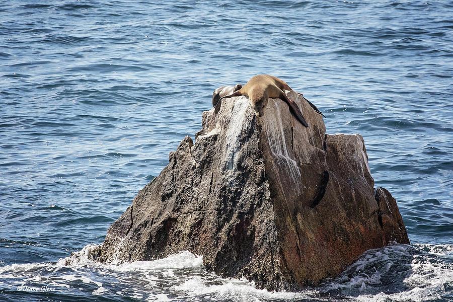 Sea Lion Rock by Deana Glenz