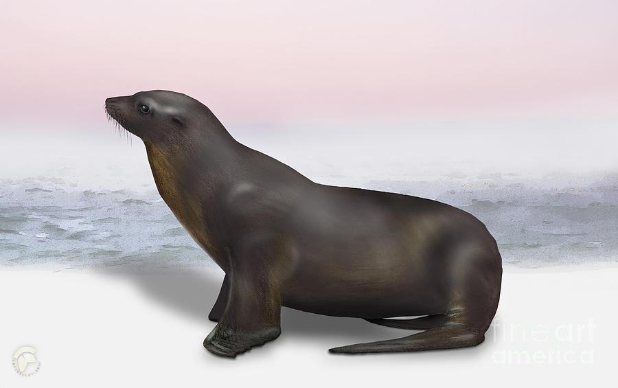 Sea Lion Zalophus Californianus - Marine Mammal - Seeloewe Painting