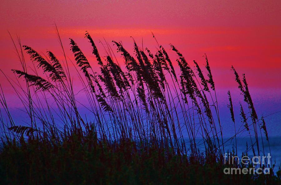 Uniola Paniculata Photograph - Sea Oat Sunset by Keri West
