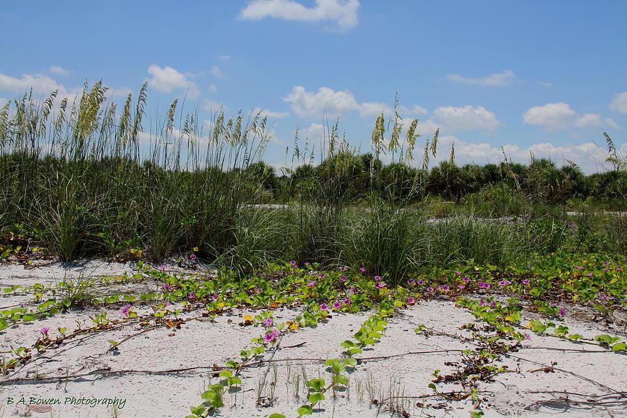 Beach Photograph - Sea Oats And Blooming Cross Vine by Barbara Bowen