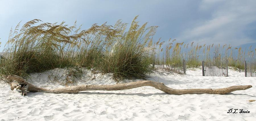 Beach Photograph - Sea Oats And Driftwood by Dennis Stein
