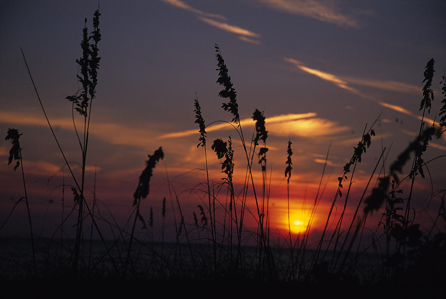 Holmes Beach Photograph - Sea Oats Blow In The Breeze As The Sun by Stacy Gold