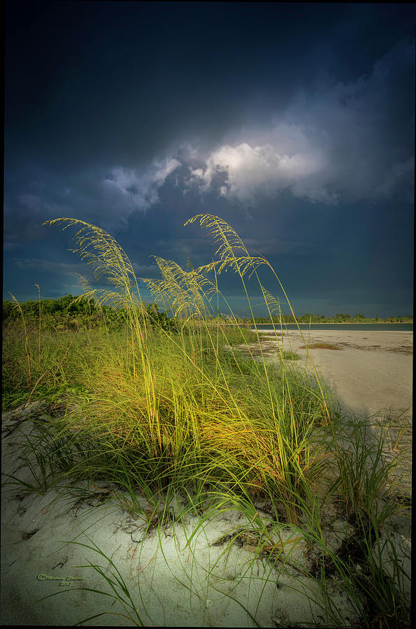 Beach Photograph - Sea Oats In The Storm by Marvin Spates