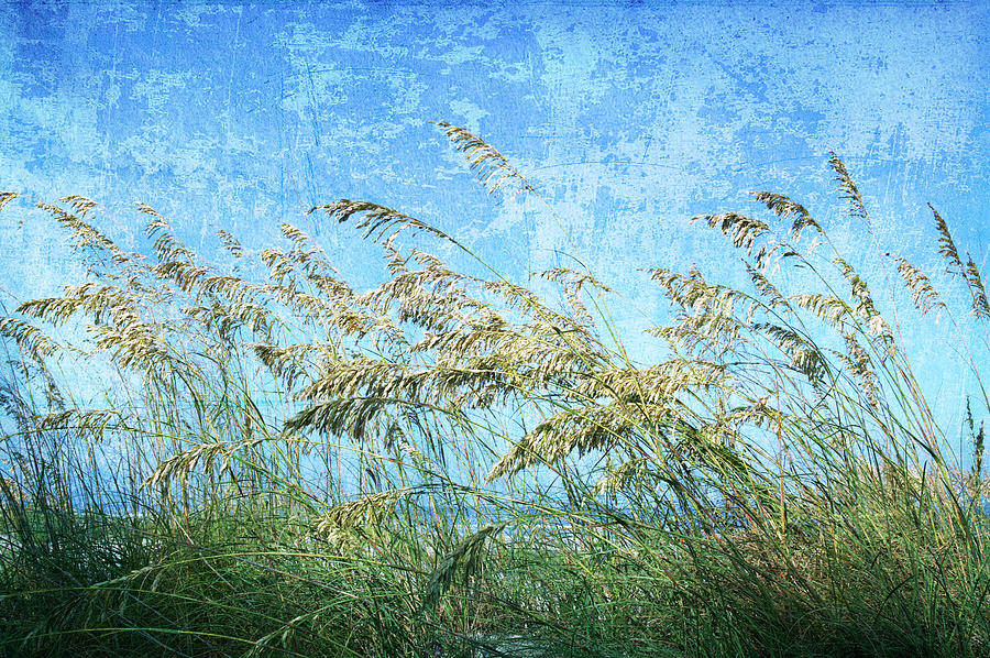 Sea Oats One Photograph by Guy Crittenden