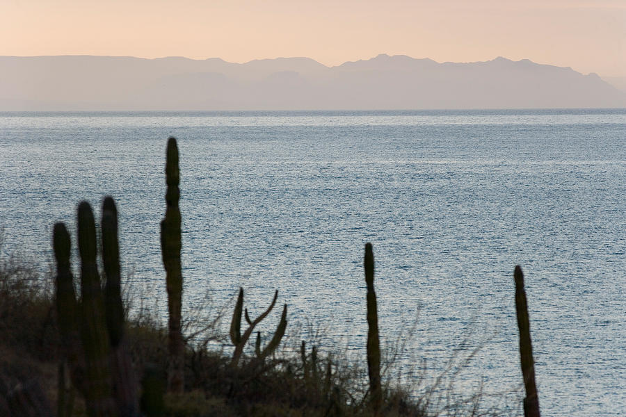 Pacific Photograph - Sea Of Cortez by Richard Steinberger