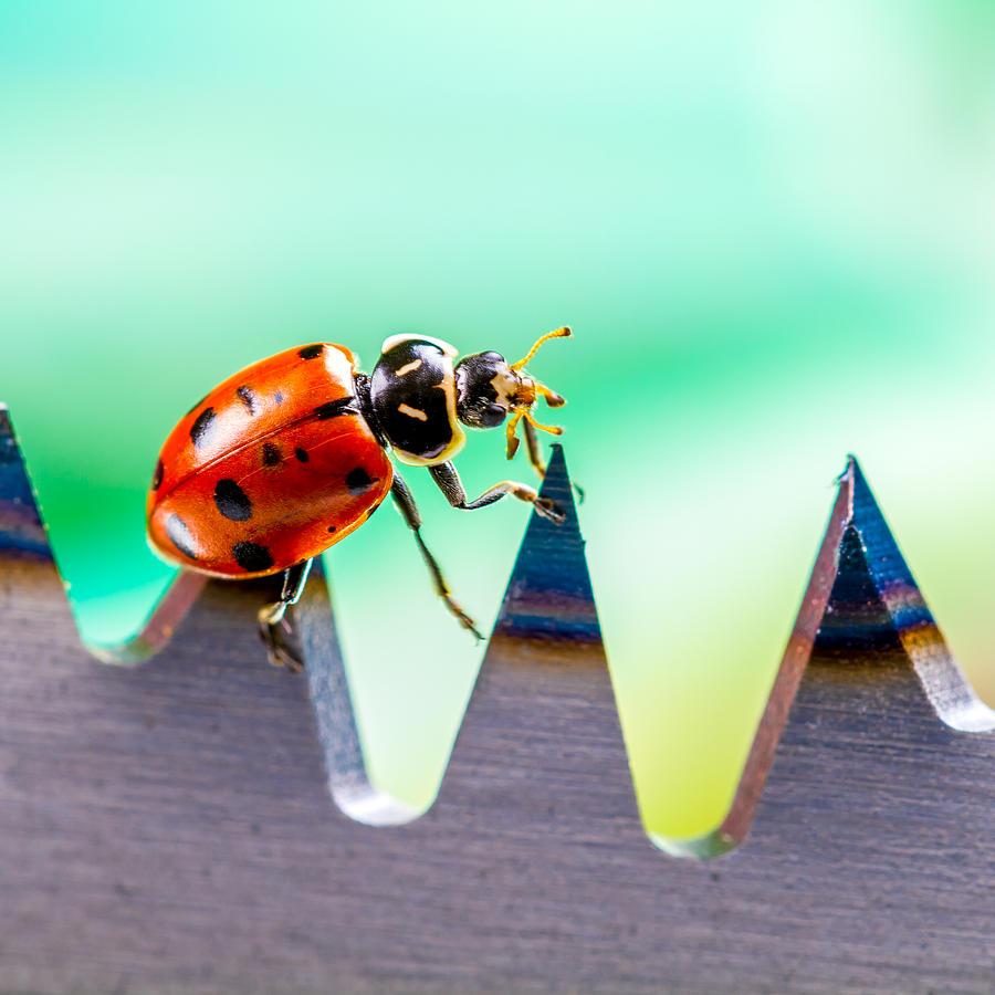 Ladybugs Photograph - Sea of Pain by TC Morgan