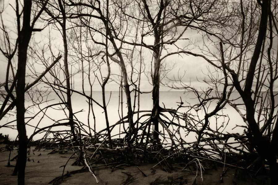 Sea of Trees by Amarildo Correa