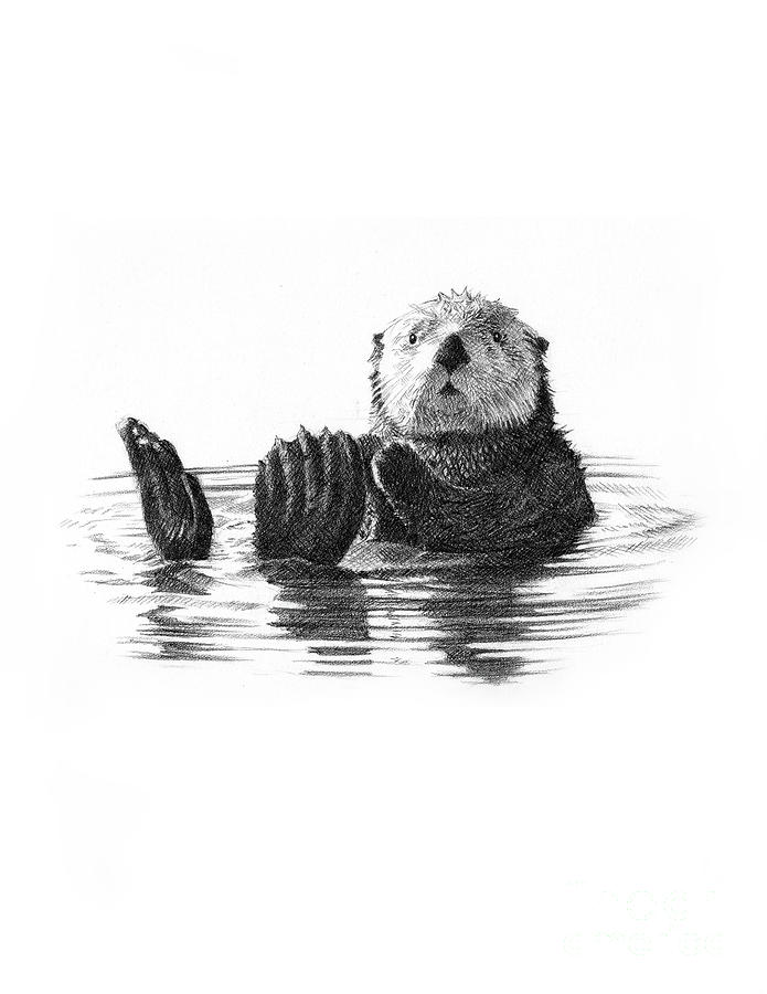 Sea Otter Drawing by Jason Reisig