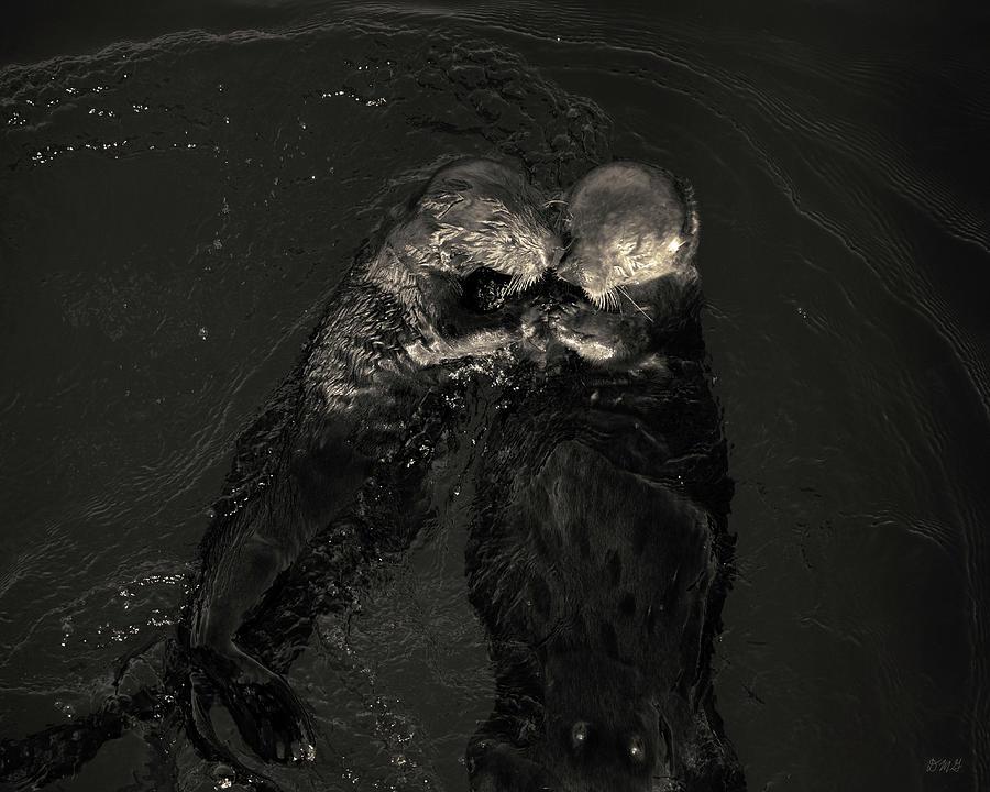 Sea Otter Photograph - Sea Otters II Toned by David Gordon