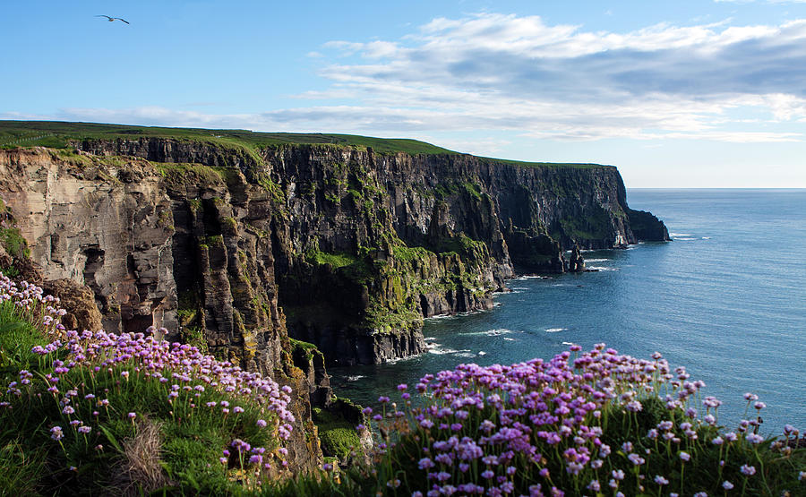 Sea Pink On The Cliffs by Aidan Moran