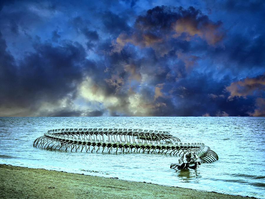 фото морского змея чудовище этом посте