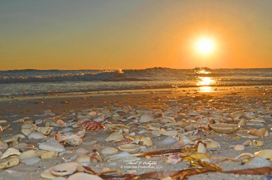 Sea Shell Sunset 2013 10 25 01 Photograph