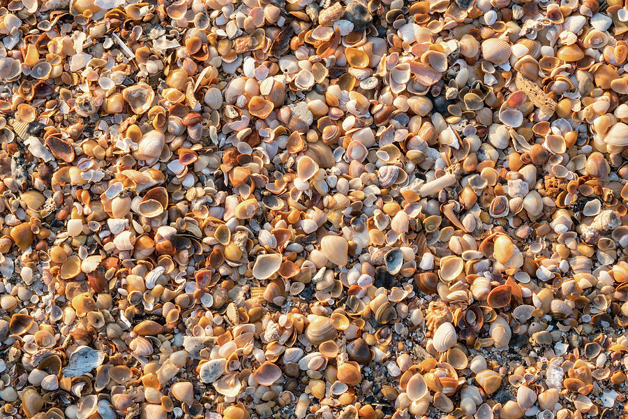 Sea Shells by the Seashore, Amelia Island, Florida by Dawna Moore Photography