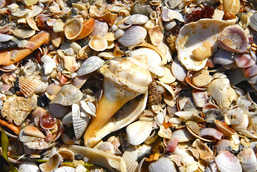 Florida Photograph - Sea Shells by David Lee Thompson